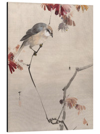 Aluminium print  Bird on Branch Watching Spider - Watanabe Seitei