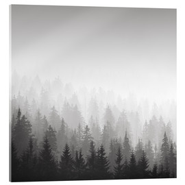 Acrylic print  Forest in fog - Philipp Dase