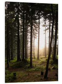 Forex  Forest in the evening light - Philipp Dase