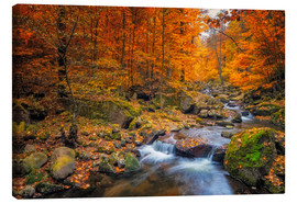 Dieter Meyrl - Golden autumn in nationalpark harz