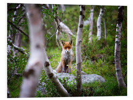 Foam board print  Fox in springtime - Dieter Meyrl