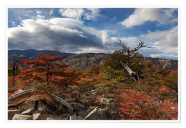 Circumnavigation - Autumn in the Magellan forest, Patagonia, Argentina