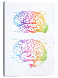 Canvas print  Rainbow brain, labeled - Mod Pop Deco