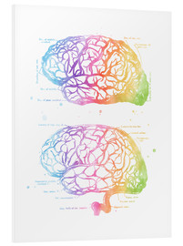 Forex  Human Brain Anatomy - Mod Pop Deco