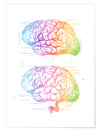 Premium poster Rainbow brain, labeled