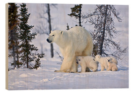 Wood print  Polar bear with three cubs in the tundra