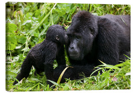 Canvas  Infant mountain gorilla with mother