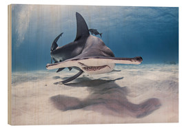 Wood print  Big hammerhead on the seabed - Cultura/Seb Oliver