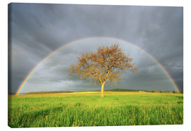 Radius Images - Meadow with rainbow in the spring