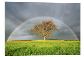 Foam board print  Meadow with rainbow in the spring - Radius Images