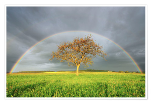 Premium poster Meadow with rainbow in the spring