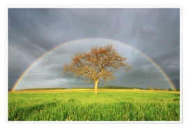 Premium poster  Meadow with rainbow in the spring - Radius Images