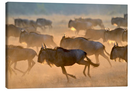 Canvas  Wildebeests during the great migration, Serengeti - age fotostock