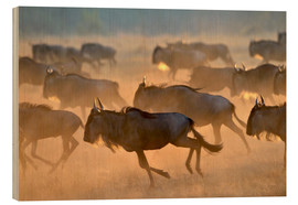 Wood print  Wildebeests during the great migration, Serengeti - age fotostock