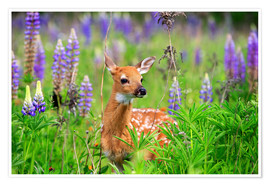 Premium poster Whitetail Deer baby between lupins