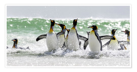 Cubo Images - King penguin bathing