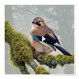 Premium poster Eurasian Jay sits on a mossy branch