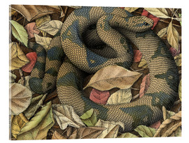 Acrylic print  Snake rustles in the leaves