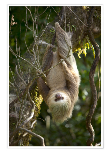 Poster Sloth over head