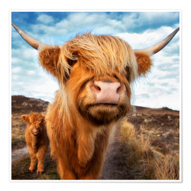 Poster  Highland cattle with calf - Westend61