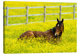 age fotostock - Horse in the rape field