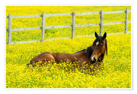 Premium poster Horse in the rape field