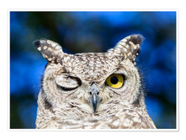 Premium poster  Winking eagle owl - Westend61