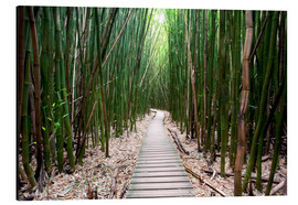 Aluminium print  Trail through the bamboo forest - Pacific Stock