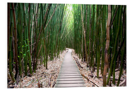 Foam board print  Trail through the bamboo forest - Pacific Stock