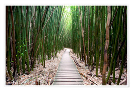 Premium poster Trail through the bamboo forest