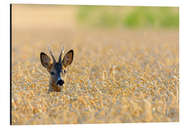 Alu-Dibond  A deer in the field - Radius Images