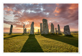 Poster  The plants of Callanish - age fotostock
