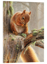 Acrylic print  Squirrel crumbles on a branch
