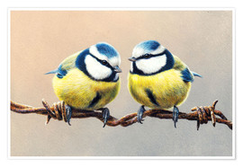 Premium poster Eurasian blue tits perching on barbed wire