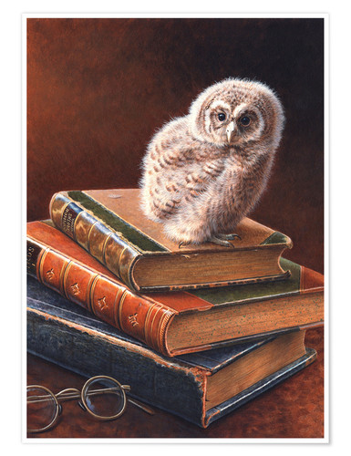 Premium poster Freshly hatched little owl
