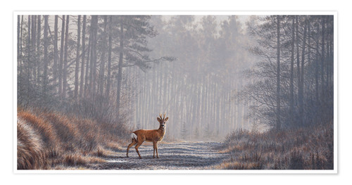 Premium poster Roe deer in forest