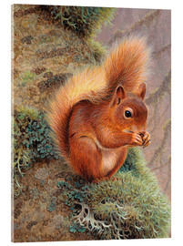Acrylic print  Squirrel with nut - Ikon Images