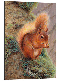 Ikon Images - Squirrel with nut