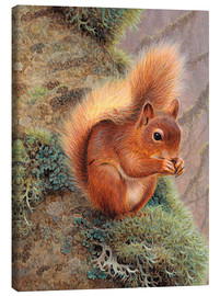 Canvas  Squirrel with nut - Ikon Images