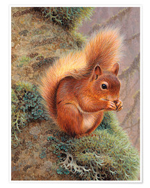 Premium poster Squirrel with nut