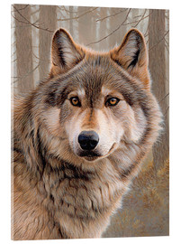 Acrylic glass  North American Wolf - Ikon Images