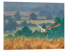 Acrylic print  Barn owl in watercolor and colored pencil - Ikon Images