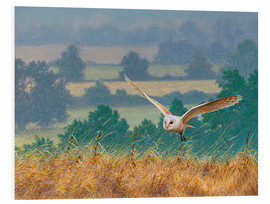 Forex  Barn owl in watercolor and colored pencil - Ikon Images