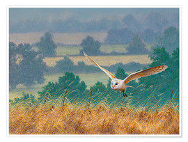Premium poster Barn owl in watercolor and colored pencil