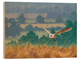 Wood print  Barn owl in watercolor and colored pencil - Ikon Images