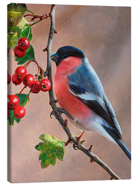 Canvas print  Bullfinch on a branch - Ikon Images