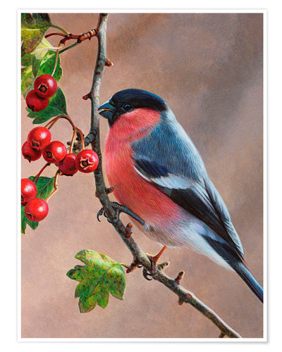 Premium poster Bullfinch on a branch