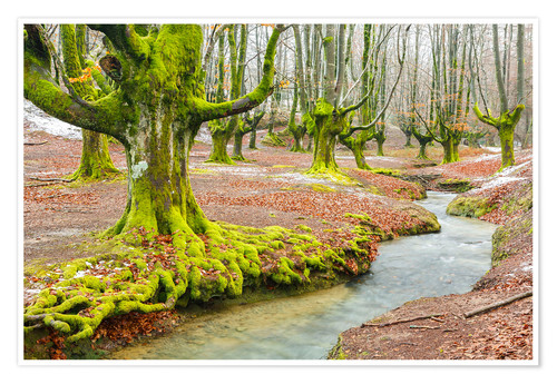 Premium poster Beechwood and rivulet. Otzarreta, Gorbeia Natural Park, Biscay, Spain, Europe.