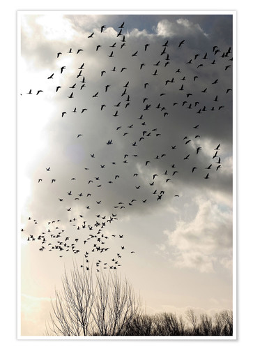 Premium poster Flock of birds in front of a cloud
