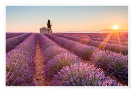 Poster Sunrise over lavender field